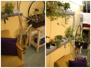 Aquaponics taimede kasvatamine, Looming Hostel Tartu